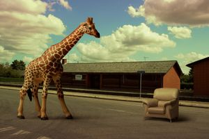 "A Giraffe, From The Series ""Sacrifice""@ DongwookLee, 2010"