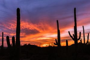Sonoran Silhouettes
