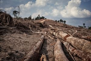 Deforestation in the working area known as 'Sitio Pimental', where the main dam will be built. There is a risk that the roots of the trees in the area that will be flooded will start to rot and their gas emissions will cause serious harm to the waters.  © Dario Bosio/Parallelozero