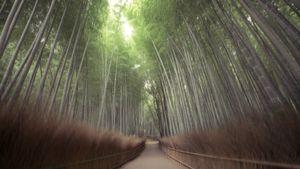 Silent Arashiyama, Kyoto