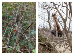 Red berries in the thicket & Severed hooves
