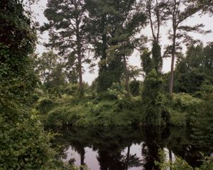 © Dana Mueller                                       The Great Dismal Swamp, Virginia/ North Carolina border  2009