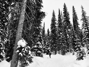 Paul Emerges From the Glades, Revelstoke, British Columbia