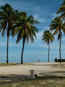 Perro, Queen of the Beach