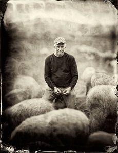 Eugene Wyatt, Catskill Merlino Sheep Farm, Goshen, NY