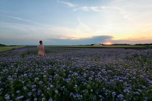 The naked man in a field of flowers at sunset