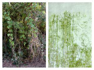 Thicket & Seaweed vegetation