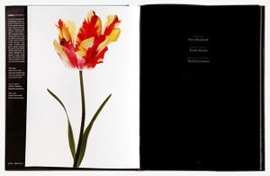 "Spread 13 ""Flaming Parrot Tulip (Tulipa 'Flaming Parrot')"" From the book, joSon Intimate Portraits of Nature"