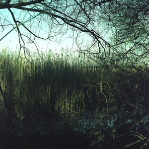Landscape photographed with film expired in 2006, 2018
