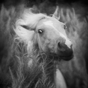 Palomino © Anne Berry