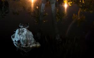 Resident Ducks of Alice Keck Park Memorial Gardens, Santa Barbara, CA 2015