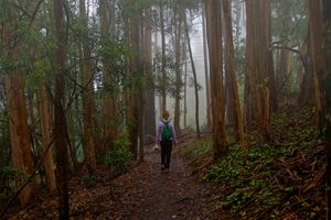 Hiking With Jeanne, Mount Sutro Forest