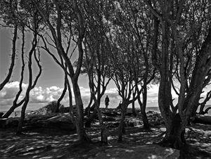 Trees_Noirmoutier_2016