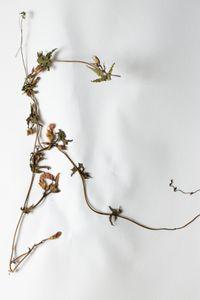 Botanical Specimen No. 2