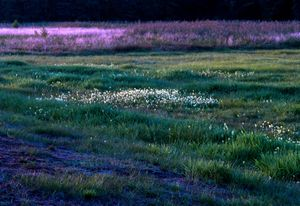 September's meadows in the Powiśle Region. Poland.