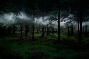 Between The Trees 3 © Ellie Davies