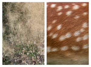 Grasses & Doe skin