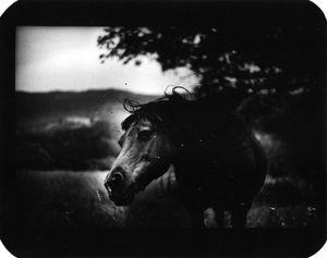 """""""Untitled"""" (Horse Shaking Head), 2006 © Giacomo Brunelli"""