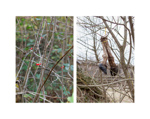 """""""Red berries in the thicket & Severed hooves"""""""