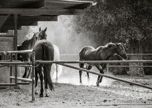 Foxfield Riding School (Thousand Oaks)
