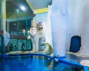Nanjing Underwater World, China  (2015)