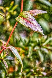 Red Vine Green Leaf