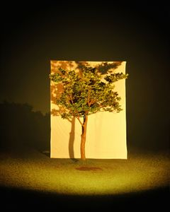 Tree #4, from the series Photography-Act © 2007 Myoung Ho Lee