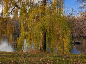 Tree With Rowboat