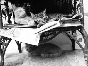 Hemingway's House's six-toed Cats