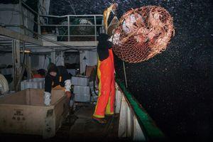 Salik, fishing snow crabs, Sisimiut