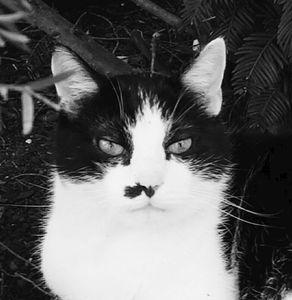Stray Cat 2