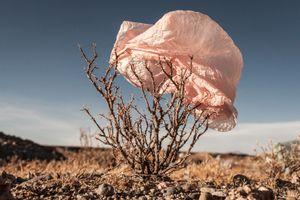 Plastic Tree #21