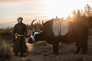 The Guide with an Ox
