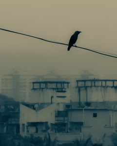 """Like a bird on the wire, like a drunk in a midnight choir, I have tried in my way to be free."""" – Leonard Cohen"""