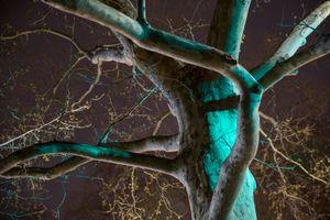 Night Trees of New York: Brooklyn Green