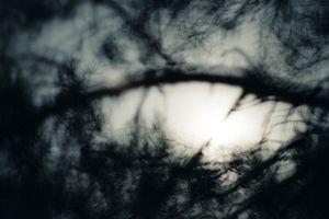 Dark Skies #11