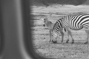 Curiosidad entre líneas
