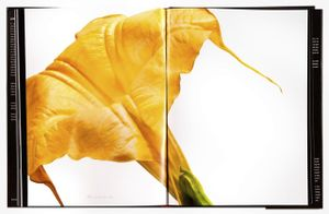 Spread 160,  Angel's Trumpet (Brugmansia versicolor) From the book, joSon Intimate portraits of nature