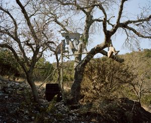 big five target # VI, mobile leopards with impala, texas, usa-from the series 'hunters'-David Chancellor