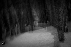 Metanaturaleza, Bosque de los miedos
