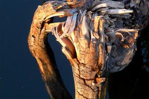 Wood 07