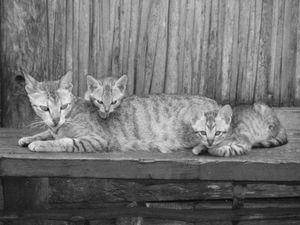 Female Cat and Kitties