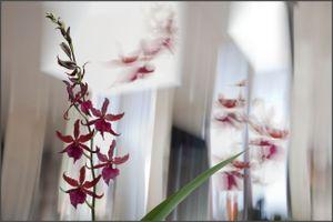 Red Orchids © Olivia Parker, 2011