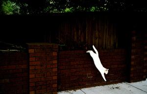 White cat, 2011