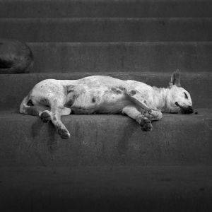 """ Sleeping dog"""
