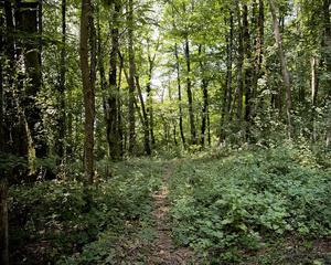 Ciociaria, Wood