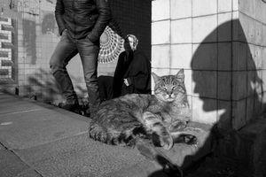 stray cat-6