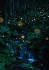 Inside the water flowing forest