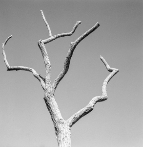Dead Forest 7