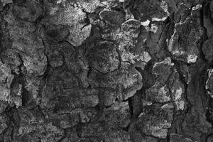 The tree bark